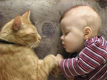 bebes-gatos-L-n4iymQ