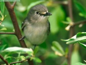 foto de ave