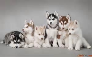 Problemas a tener en cuenta antes de comprar un animal de compañía