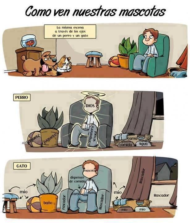 Como ven las mascotas a sus dueños