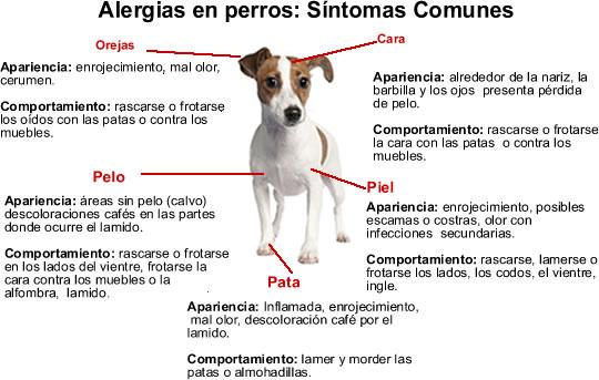 alergiasenperros