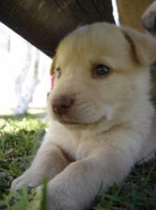 cachorros-de-perros_2278301