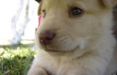 El Consejo General de Colegios Veterinarios de España y la importación de cachorros en España