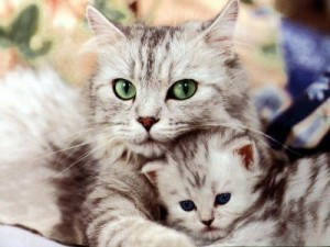 Foto de nuevas mascotas.com