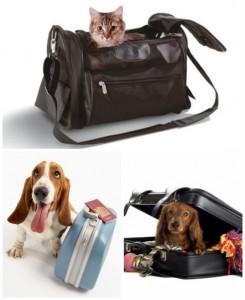 perros-gatos-viaje