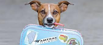 Pasaporte para perros, gatos y hurones