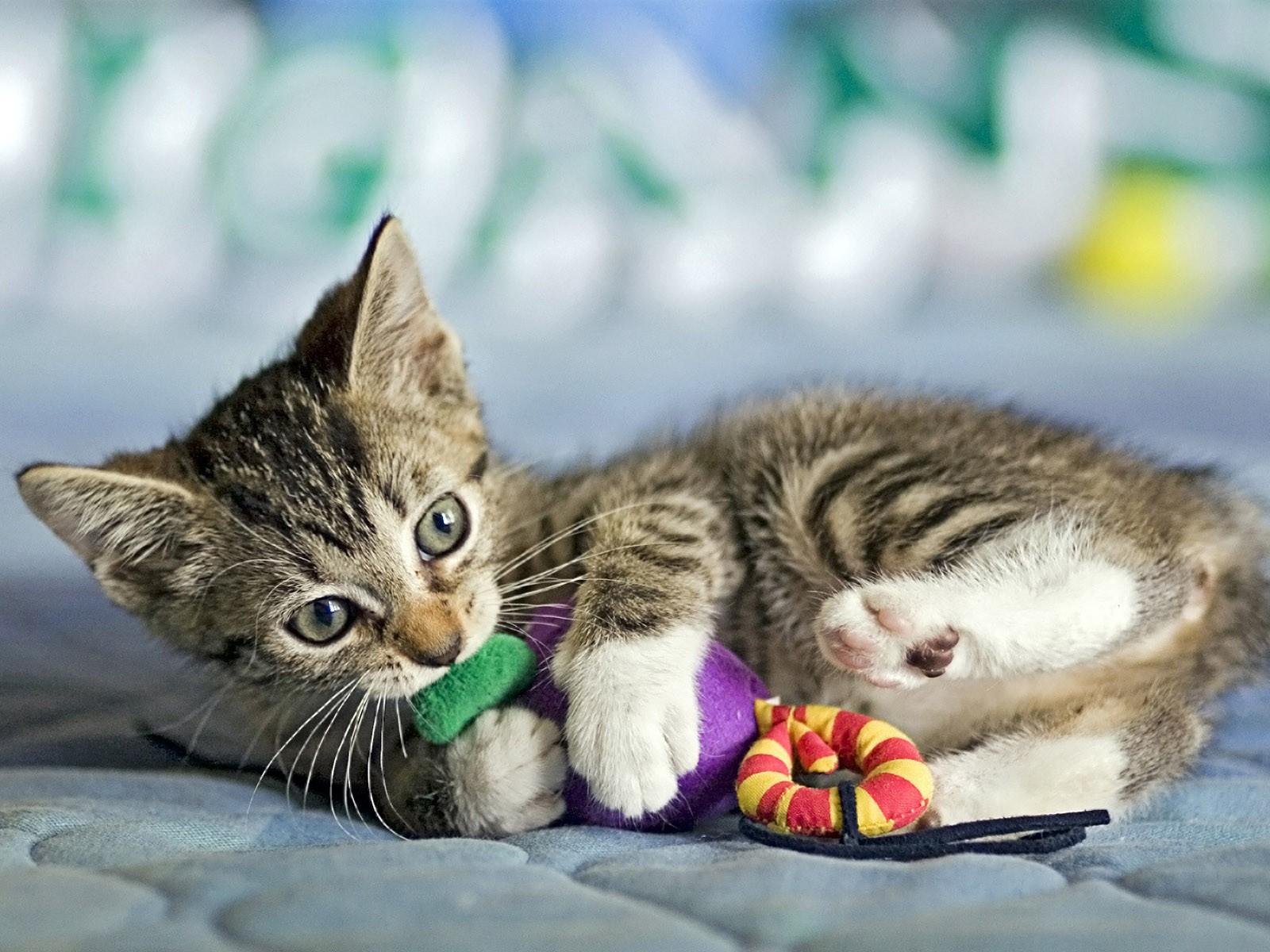 Manual para jugar con un gato en cinco pasos – Clínica Veterinària Poblenou