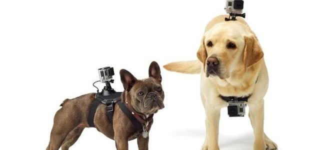 Juguetes tecnológicos para dueños de mascotas