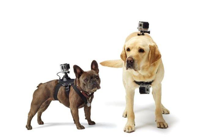 Tecnologías para mascotas