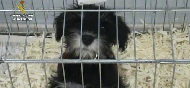 Inmovilizan cachorros en Barajas por incumplir legislación