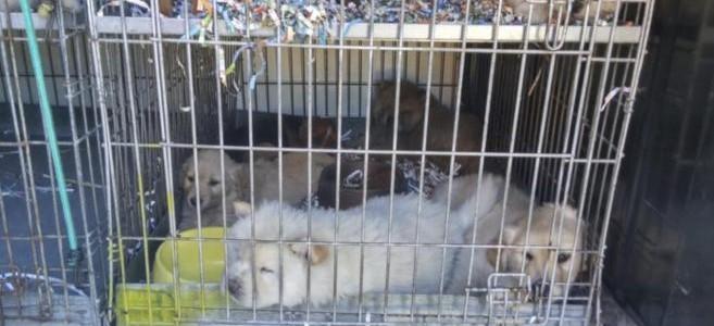 Tráfico de animales de compañía. Precauciones en la compra de cachorros