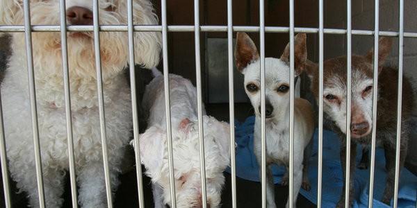 Barcelona logra una cifra record en la adopción de perros y gatos