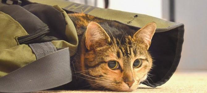 Guía  para viajar con perro o gato en tren