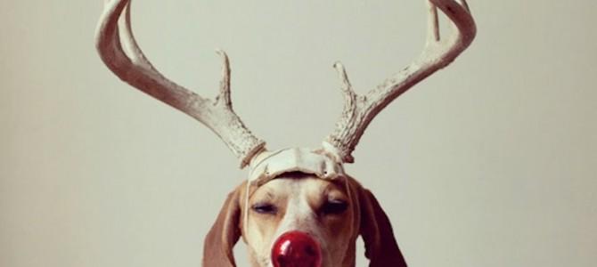 Fotografías entrañables perro artista