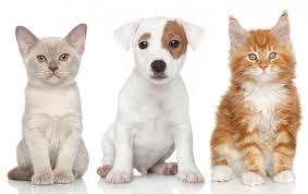 Guía para una compra de cachorros responsable