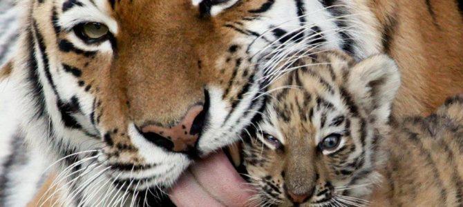 Blog sobre derecho animal