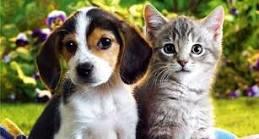Nueva plataforma para la recuperacion de animales de compañía en el,extranjero