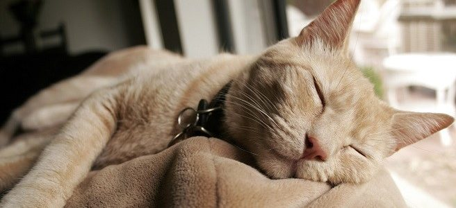 Eutanasia en gatos, ¿cuando?, ¿cómo?. ¿Lo podemos explicar a los niños?