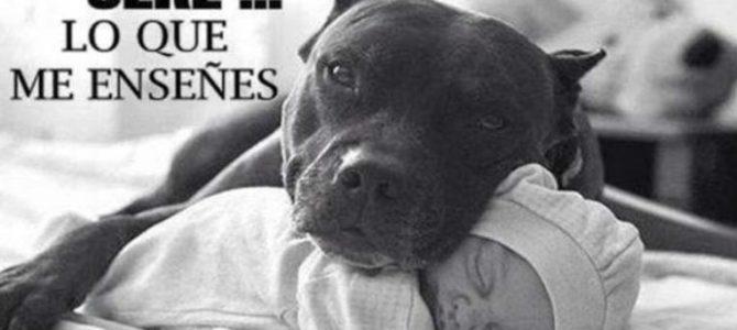 Marcaje canino,como detectar la agresividad en nuestro perro
