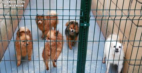 La venta de fraudulenta de cachorros, la mercancía que viene del Este