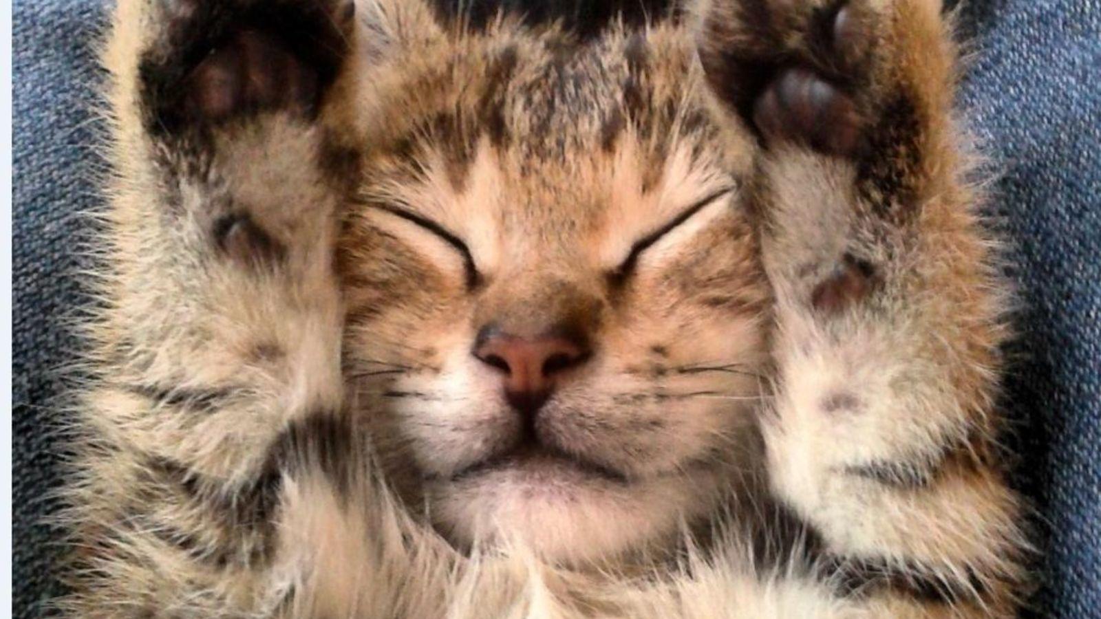 quieres-acariciar-y-ronronear-visita-un-cafe-para-gatos-y-dejate-llevar