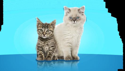 Un nuevo gatito en casa, recomendaciones