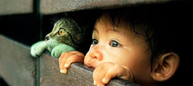Transmisión de enfermedades de gatos a humanos