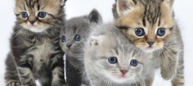 Cuidados del gatito, aspectos importantes