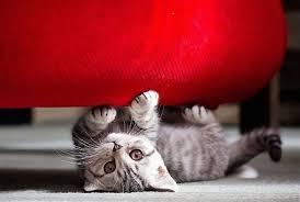 ¿ Por qué rascan los gatos ?