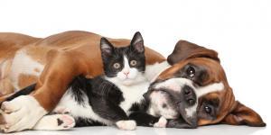 ¿Cómo valorar los alimentos para nuestras mascotas?