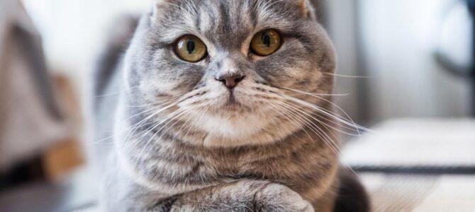 Esterilizar a nuestro gato/gata
