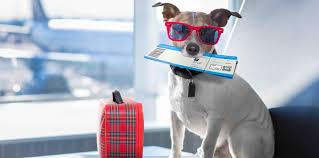 Guia para viajar fuera de España con animales de compañia