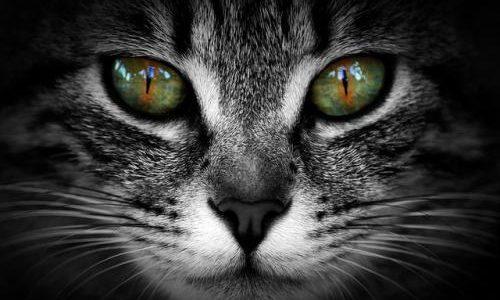 Entender mejor a nuestros gatos